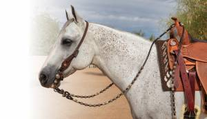 Professional's Choice Collection - Rawhide Romal Reins