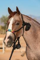 Professionals Choice - Cowboy Braided Rope Halter