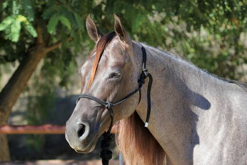 Professionals Choice - Rope Halter