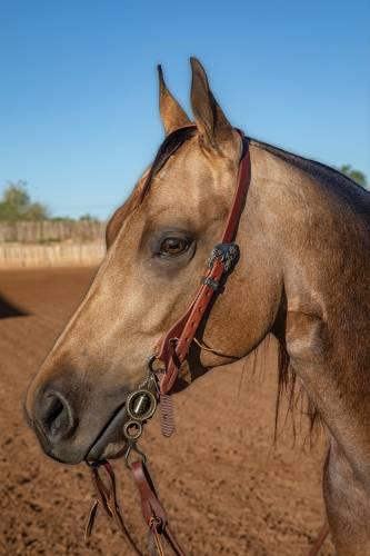 """Ranch 3/4"""" Single Ear Headstalls"""