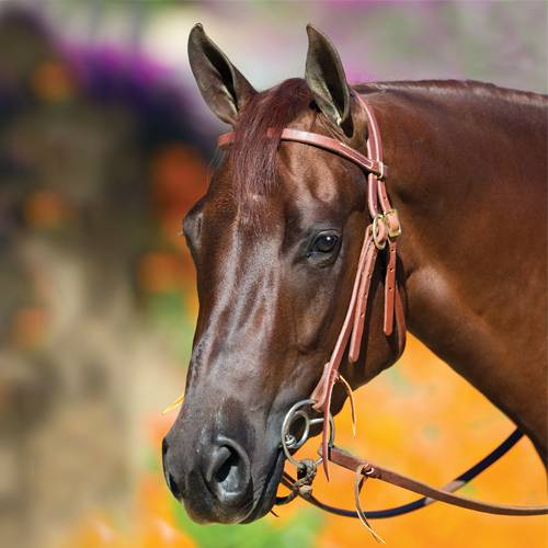 The Bob Avila Collection by Professionals Choice - Bob Avila Double Buckle Headstall with Double Ring Snaffle