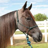 Western - Halters, Lead Ropes & Breast Collars