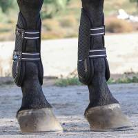 Boots & Wraps - Pro Performance - Pro Mesh TPU Show Jump Boots