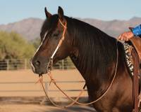 Easy-Change Rope Cheek Headstall - Image 3