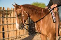 "Al Dunning Tack by PC - Training Tack - Draw Rope Martingale ""The Black Rope"""