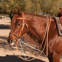 Al Dunning Tack by PC - Training Tack - German Martingale