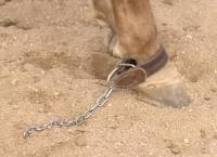 AD Kicking Chain - Image 2
