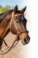 Professional's Choice Schutz Collection - Headstalls - Loping Hackamore
