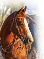 Professional's Choice Schutz Collection - Headstalls - Easy-Change Rope Cheek Headstall