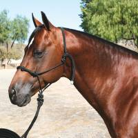 Professionals Choice - Clinician Halter